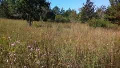 Верхний слой почвы, густо заросший травянистыми растениями, - основа плодородия