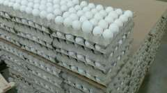 Вес куриного яйца без скорлупы. Средний вес яиц куриных