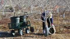 Весенняя подкормка плодовых деревьев и кустарников. Весной ранней подкормка молодых плодовых деревьев