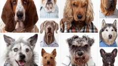 Виды собак
