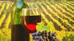 Виноград: схема посадки весной