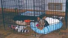 Вольер в квартиру для собаки. Содержание собак в домашних условиях