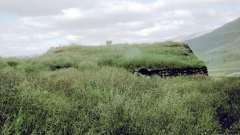 Все травы – это неотъемлемая часть экосистемы планеты