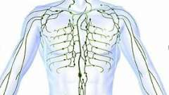 Вспоминаем школьный курс анатомии: где у людей лимфоузлы находятся