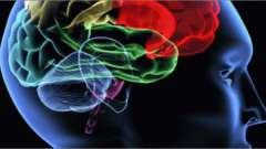 Высшая нервная деятельность. Рефлексы