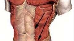 За красоту талии отвечают косые мышцы живота
