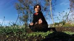 Зачем нужна газонная трава? Как сажать правильно газоны?