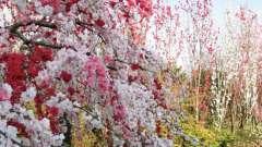 Загадка про весну как способ всесторонне развить малыша