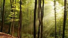 Загадки о деревьях для детей и их родителей