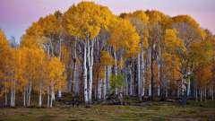Загадки про берёзу - истинно русское дерево