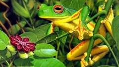 Загадки про лягушек: учимся, играя