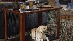Загон для собак: строим сами