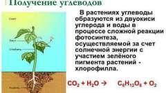 Запасной углевод растений, его роль в процессе жизнедеятельности