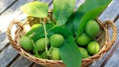 Зеленые грецкие орехи. Лечение народными методами