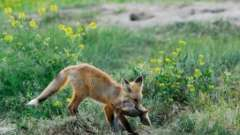 Животные воронежской области: редкие и распространенные