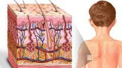 Значение кожи для организма человека
