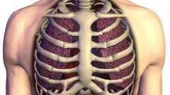Значение скелета для человека. Особенности скелета