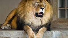 Зоопарк в тюмени:общая информация